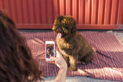 Mani della donna con lo Smart Phone mobile che prende una foto del wa spagnolo Fotografie Stock