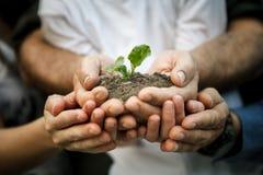 Mani della famiglia degli agricoltori Fotografia Stock