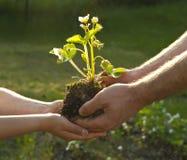 Mani della gente con la pianta Fotografie Stock Libere da Diritti
