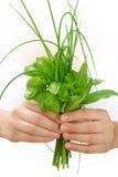 Mani della giovane donna che tengono le erbe fresche, basilico, erba cipollina, salvia Immagine Stock
