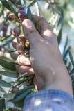 Mani della lavoratrice agricola Fotografia Stock