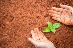 Mani della plantula proteggente della gente su suolo rosso Ecologia e Fotografia Stock Libera da Diritti