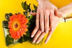 Mani della ragazza con i chiodi beige di colore sul fiore della gerbera e sul fondo giallo Fotografia Stock