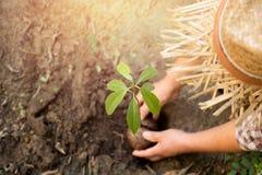 Mani di agricoltura della donna che piantano un giovane albero Fotografie Stock Libere da Diritti