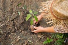 Mani di agricoltura della donna che piantano un giovane albero Immagini Stock
