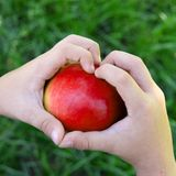 Mani di Childs con la grande mela appena raccolta Frutta stagionale russa organica e bio- Vista superiore fotografia stock