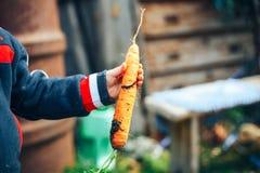 Mani di un ragazzino che tiene una grande carota immagine stock