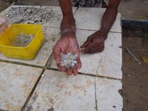 Mani di un uomo anziano Fotografia Stock
