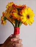 mani di una donna che afferra un mazzo floreale con i fiori della gerbera ed il fondo bianco fotografie stock libere da diritti