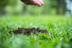 Mani di una donna dell'agricoltore che innaffia le giovani piante verdi e che consolida la pianta del bambino Ambiente di mondo Immagini Stock Libere da Diritti