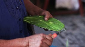 Mani di una donna indigena, pulenti un fico d'India per venderlo nel mercato, nella città di Xilitla archivi video
