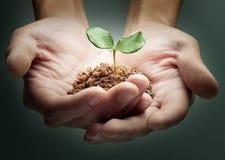 Mani e pianta Fotografie Stock Libere da Diritti