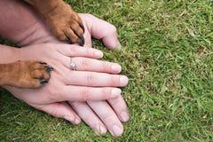 Mani e zampe Fotografia Stock