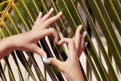 Mani femminili che mostrano simbolo del cuore fotografia stock libera da diritti