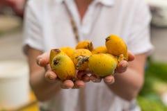 Mani femminili che tengono frutti della nespola Fuoco selettivo fotografia stock