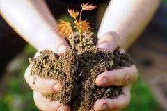 Mani femminili che tengono suolo e pianta, primo piano a fotografia stock libera da diritti