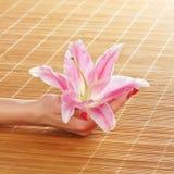 Mani femminili che tengono un fiore del giglio Fotografia Stock Libera da Diritti