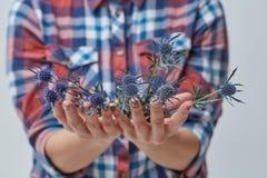 Mani femminili con il eryngium blu del fiore Fotografie Stock