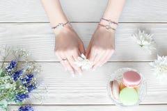 Mani femminili con il fiore, disposizione piana Fotografie Stock