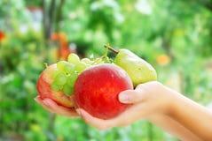 Mani femminili di Beautful e frutti organici freschi Fotografia Stock Libera da Diritti