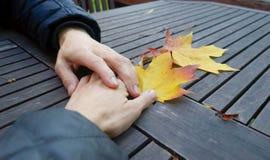 Mani insieme Una mano amica ad un amico sulla tavola ruvida del fondo di autunno con le foglie di acero immagini stock libere da diritti