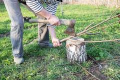 Mani maschii che tagliano legna da ardere a pezzi Fotografie Stock