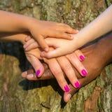Mani miste della famiglia sulla corteccia di albero immagine stock libera da diritti