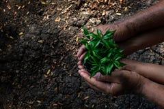 Mani padre e figlia che tengono le plantule sul suolo posteriore nel parco naturale di crescita della pianta per ridurre riscalda fotografia stock