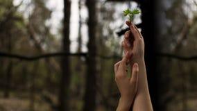 Mani, piante Fotografia Stock Libera da Diritti