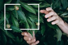 Mani su fondo verde Disposizione piana, vista superiore Con una struttura bianca per l'iscrizione fotografie stock libere da diritti