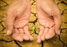 Mani umane che tengono giovane pianta verde nel suolo Immagini Stock