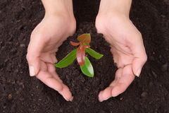 Mani umane che tengono pianta Fotografia Stock Libera da Diritti