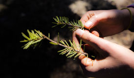 Mani umane che tengono pianta Immagini Stock Libere da Diritti