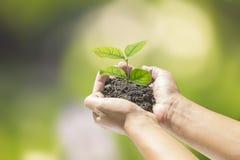 Mani umane che tengono piccola pianta Immagine Stock