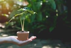 Mani umane che tengono piccolo concetto verde di flora Fotografia Stock Libera da Diritti