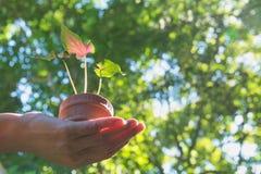 Mani umane che tengono piccolo concetto verde di flora Fotografie Stock Libere da Diritti