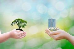 Mani umane del bambino di concetto di ecologia che tengono la grande costruzione dell'albero della pianta con sul fondo vago fotografia stock libera da diritti