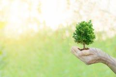 Mani umane di concetto di ecologia di doppia esposizione che tengono il grande albero della pianta fotografia stock