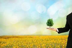 Mani umane di concetto di ecologia che tengono il grande albero della pianta con fotografia stock libera da diritti