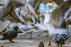Mania furiosa d'alimentazione degli uccelli selvaggi fotografie stock libere da diritti