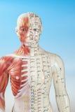 Manichino di agopuntura Fotografia Stock