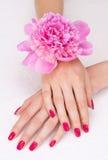 Manicura del color de rosa de la visión superior con la flor Fotografía de archivo libre de regalías