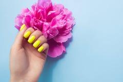 Manicura femenina de moda elegante Clavos amarillos de ne?n con las flores rosadas de la peon?a en fondo azul foto de archivo