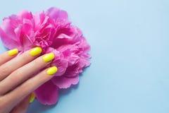 Manicura femenina de moda elegante Clavos amarillos de ne?n con las flores rosadas de la peon?a en fondo azul fotos de archivo libres de regalías