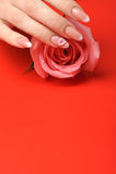 Manicura. Manos femeninas en fondo rojo Imagen de archivo