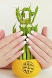 Manicura oval francesa. Fotografía de archivo libre de regalías