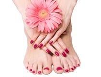 Manicura, pedicure y flor rosados Foto de archivo libre de regalías