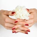 Manicura roja y flor blanca foto de archivo
