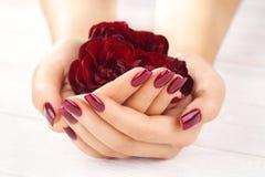 Manicura vinosa con las flores color de rosa Spa Imágenes de archivo libres de regalías