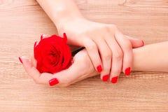 Manicura y flor rojas hermosas Fotografía de archivo